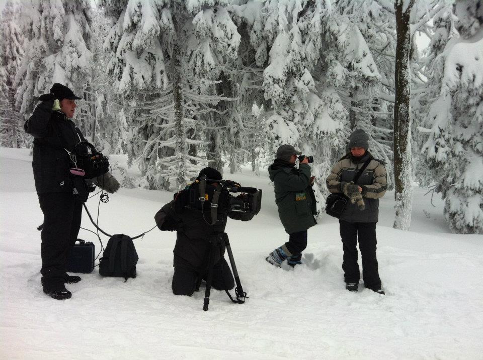 VOX - hundkatzemaus in Schweden